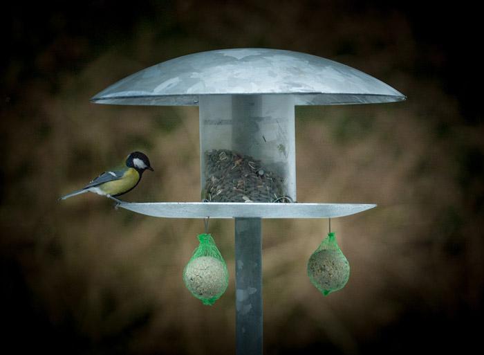 Foderbræt til fugle